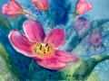 pink-flower_576x430