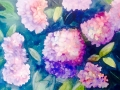pinkhydrangea_576x435